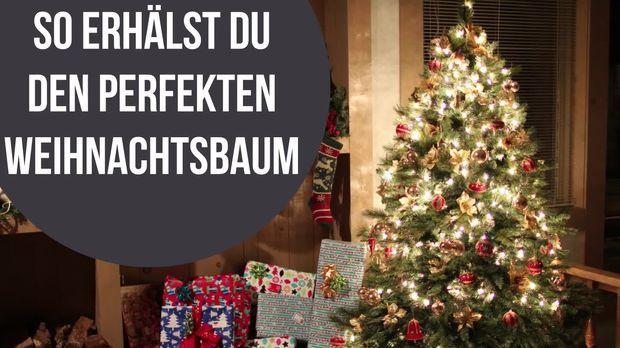 Bis Wann Bleibt Der Weihnachtsbaum Stehen.So Bleibt Dein Weihnachtsbaum Länger Grün Und Frisch