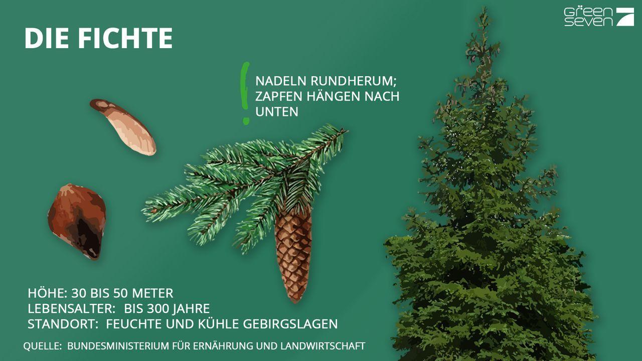 Fichte - Bildquelle: ProSieben