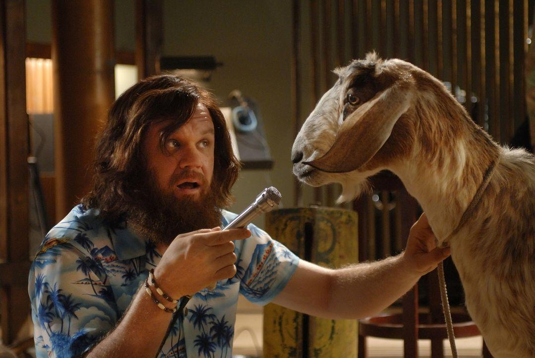 Verwirrt und ausgelaugt: Dewey (John C. Reilly) fallen keine Songs mehr ein. Vielleicht kann ihm seine Ziege helfen ... - Bildquelle: 2007 Columbia Pictures Industries, Inc.  and GH Three LLC. All rights reserved.