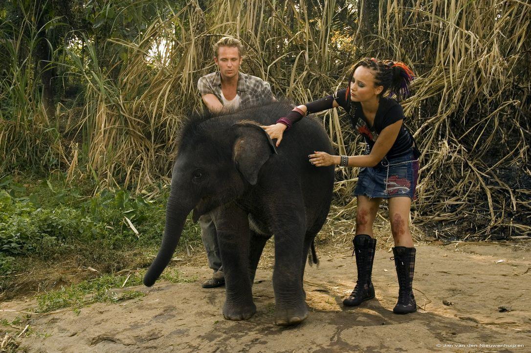 Schon bald wird Mike (Patrick Marten, l.) und Taffie (Monique van der Werff, r.) klar, dass die verschwundenen Elefanten in ein abgelegenes Tal entf... - Bildquelle: Jan van den Nievwenhuijzen