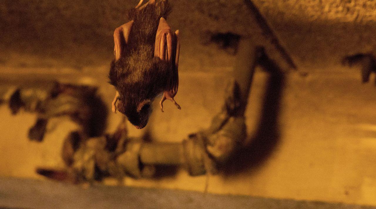 Nur weil sie kleiner sind, sollte man Fledermäuse nicht unterschätzen. Das müssen Jamie und Co. in Brasilien schmerzlich feststellen ... - Bildquelle: Steve Dietl 2015 CBS Broadcasting Inc. All Rights Reserved.