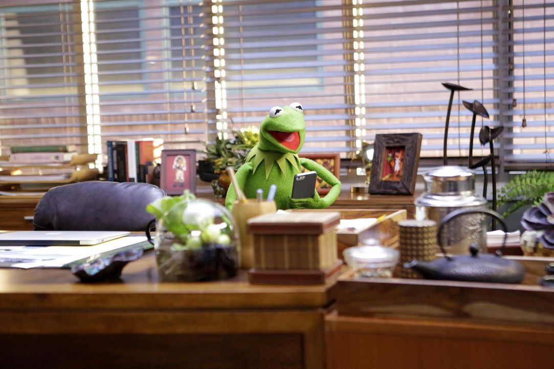 Die Vorbereitungen für eine neue Show sind in vollen Gange: Kermit ... - Bildquelle: Nicole Wilder ABC Studios