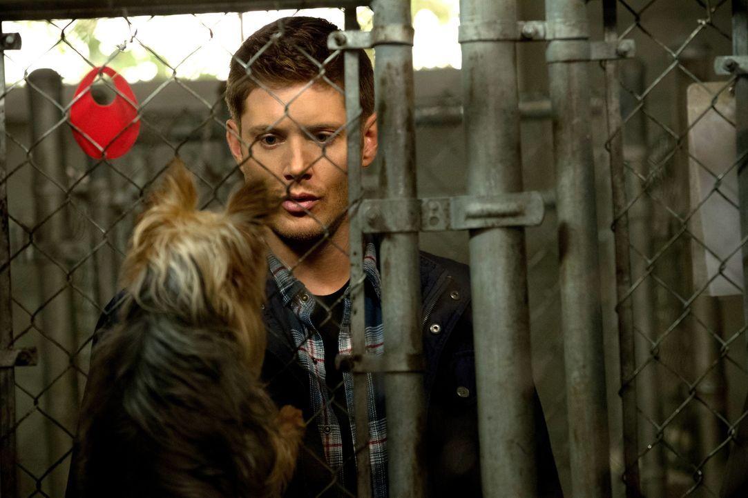 Nachdem Dean (Jensen Ackles) die Sprache der Tiere versteht, führt er eine ungewöhnliche Befragung durch. Doch plötzlich zeigt der Zauberspruch auch... - Bildquelle: 2013 Warner Brothers