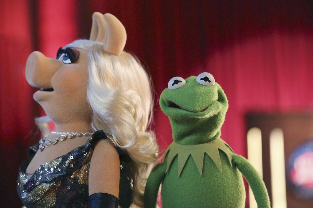 Kermit (r.) braucht die Hilfe von Miss Piggy (l.), um das passende Geschenk für Denise zu finden. Doch kann sie ihm wirklich helfen? - Bildquelle: Carol Kaelson ABC Studios