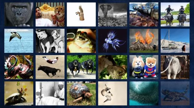 Galileo Big Pictures - Galileo Big Pictures - Galileo Big Pictures - Wild Life