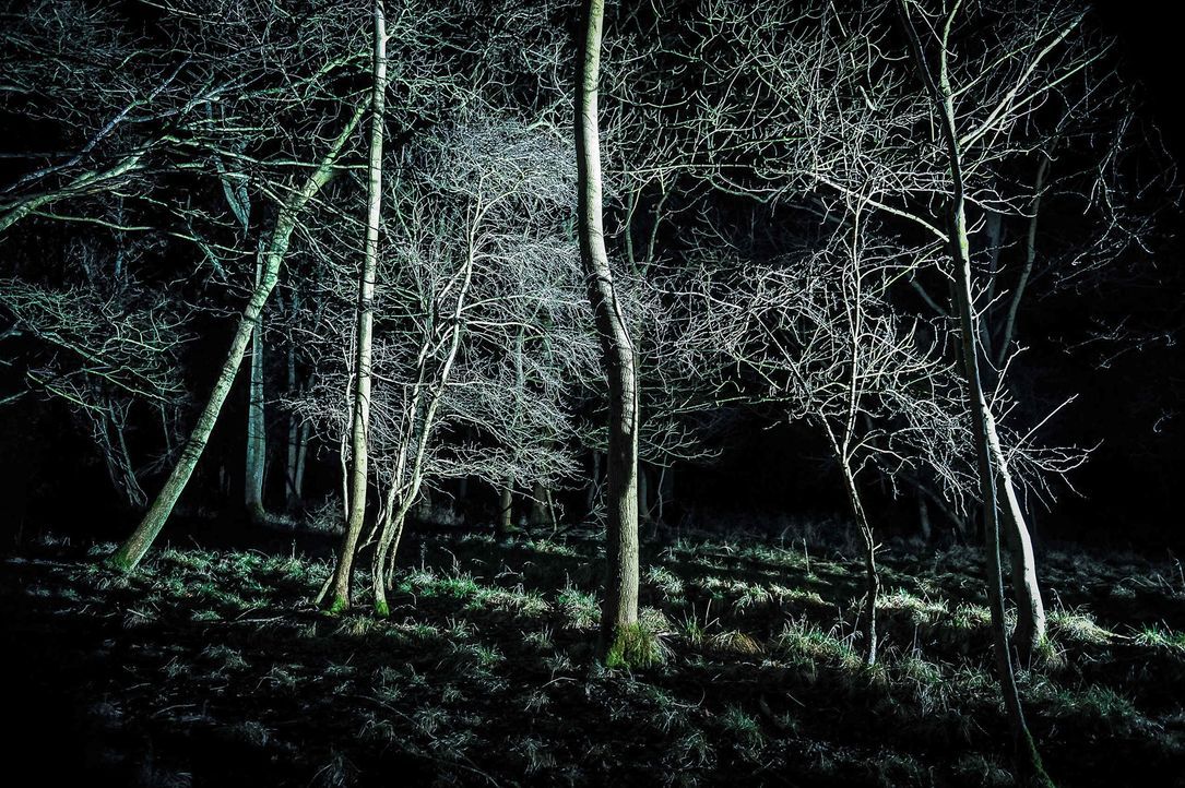 Scream_if_you_can3WW_9677 - Bildquelle: Willi Weber Fotografie