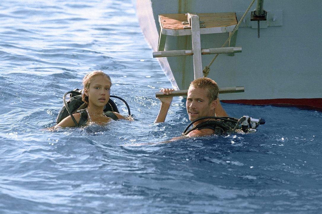 Hai-Taucherin Sam (Jessica Alba, l.) lebt mit ihrem Freund, dem Tauchlehrer Jared (Paul Walker, r.), in einem klapprigen Trailer auf den Bahamas. Ei... - Bildquelle: Metro-Goldwyn-Mayer Studios Inc. All Rights Reserved.