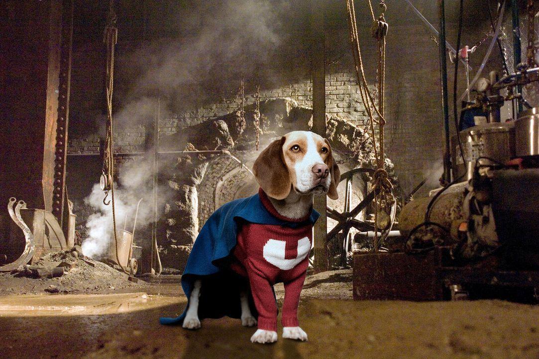 Ein tollpatschiger Polizeihund landet erst auf der Straße und dann in einem Labor, wo er zu einem Superhund mutiert ... - Bildquelle: Walt Disney Pictures.  All rights reserved