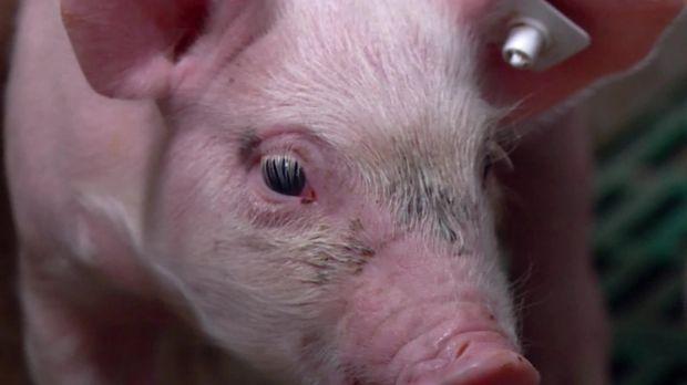 Galileo - Galileo - Donnerstag: Dafür Oder Dagegen? Tierrechte