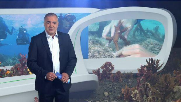 Galileo - Galileo - Dienstag: Wie Ein Meeresbiologe Korallenriffe Retten Will