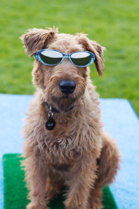 Der coolste Hund der Welt: Rexx - Bildquelle: New Regency Productions, Inc.