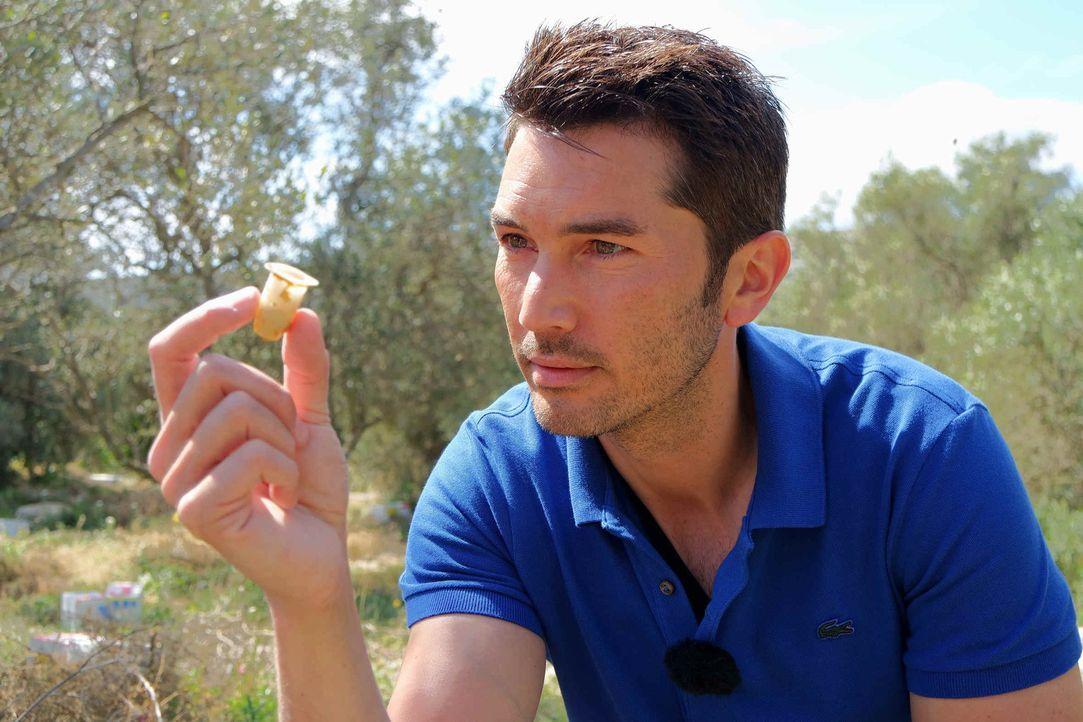 In Malta bekommt Stefan Gödde einen Einblick in die Rettungsversuche der Bienenpopulation und welche Zukunftspläne Imker für ihre Bienen haben ... - Bildquelle: ProSieben