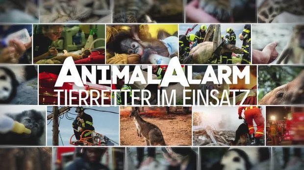 Galileo - Galileo - Sonntag: Galileo Plus: Animal Alarm - Tierretter Im Einsatz