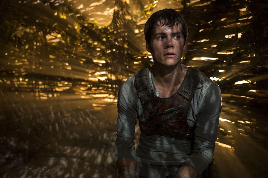 Thomas (Dylan O'Brien) erwacht auf einer Lichtung, auf der ihn eine Gruppe von Jungs empfängt. Wie er können sie sich alle nicht daran erinnern, wer... - Bildquelle: 2014 Twentieth Century Fox Film Corporation.  All rights reserved.