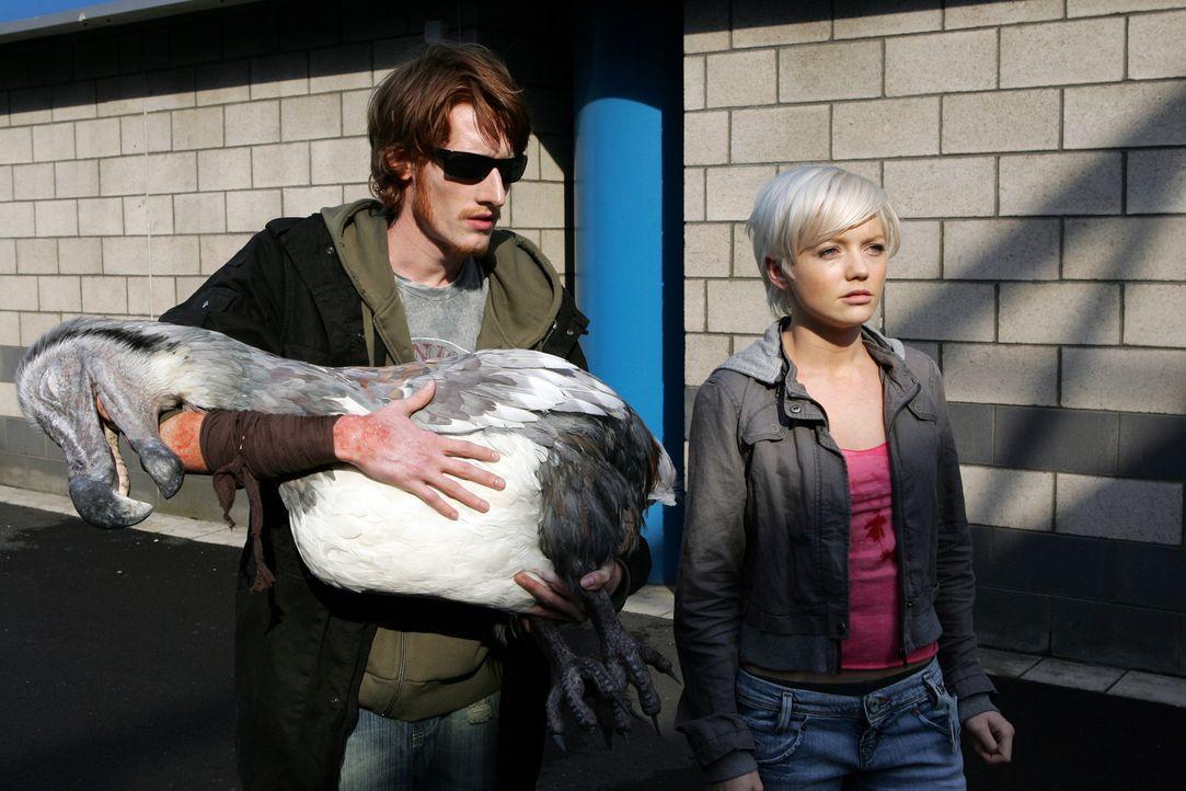 Haben einen Dodo einfangen können, um ihn zu untersuchen: Tom (Jake Curran, l.) und Abby (Hannah Spearritt, r.) ... - Bildquelle: ITV Plc