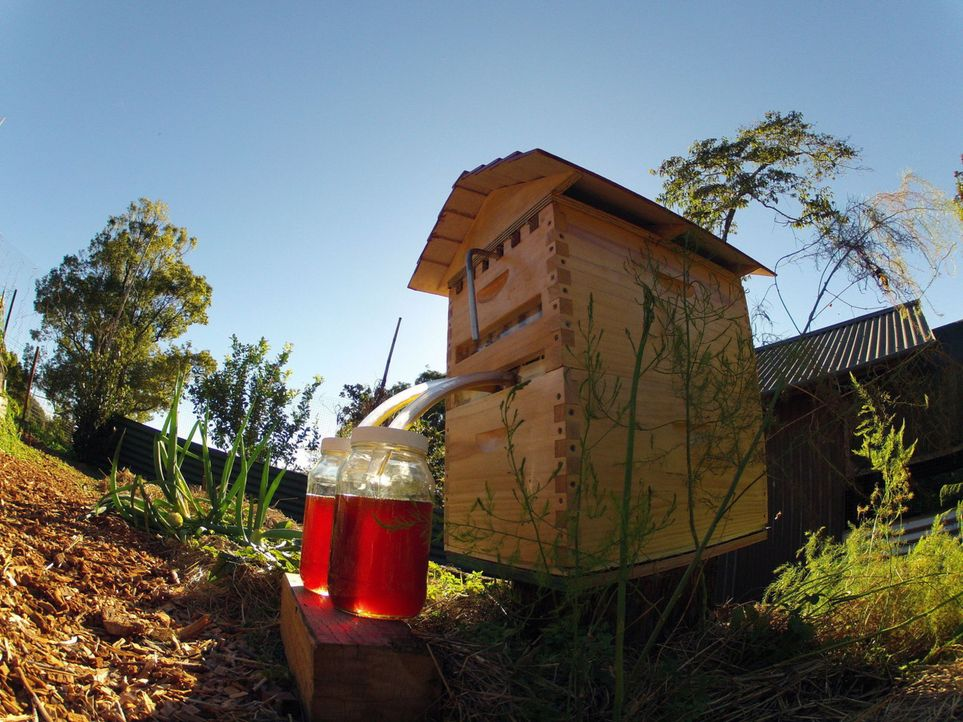 "Gezapft, nicht geschleudert, bitte. Ein Bienenstock mit Zapfhahn ist das Ergebnis der Crowd-Funding-Kampagne ""Honey Flow"" in Australien ... - Bildquelle: Honeyflow.com"