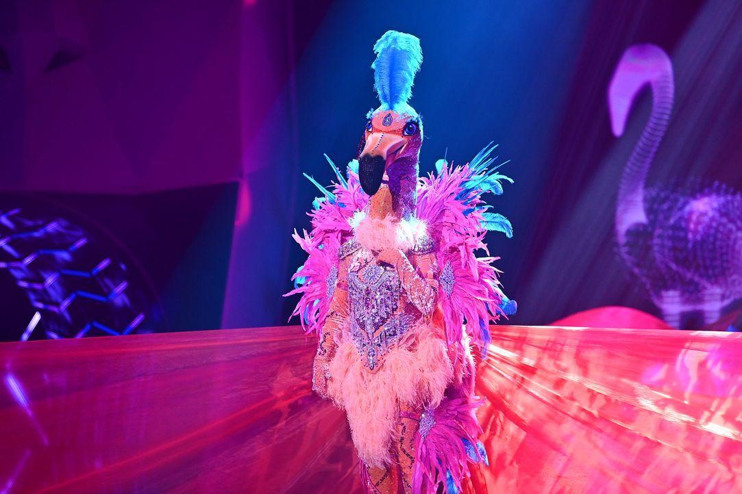 Der Flamingo - Bildquelle: Willi Weber ProSieben / Willi Weber