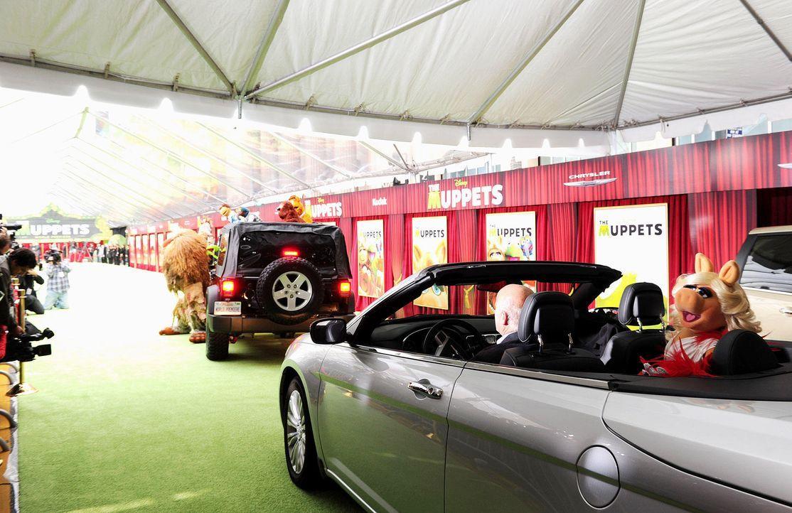 muppets-premiere-la-miss-piggy-wireimagejpg 1900 x 1231 - Bildquelle: WireImage