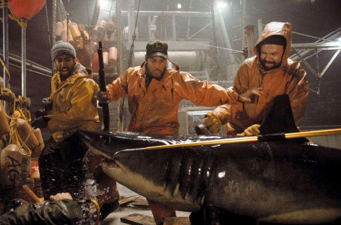 Endlich stoßen Billy (George Clooney, M.), Dale (John C. Reilly, r.) und Alfred (Allen Payne, l.) auf reiche Fischgründe. Nachdem jedoch die Kühl... - Bildquelle: Warner Bros. Pictures