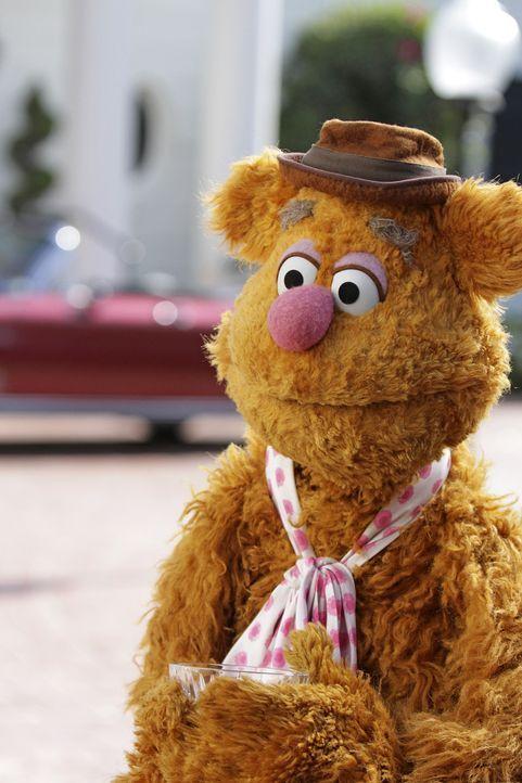 Während Kermit versucht, Miss Piggy aufzuheitern, freut sich Fozzie Bär (Bild) über eine Einladung zu einer Hausparty von Jay Leno ... - Bildquelle: Andrea McCallin ABC Studios