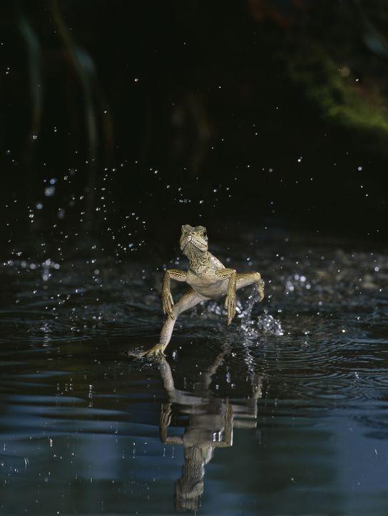 """Egal, ob Flügel oder Flossen, acht oder zwei Beine - """"Unser Leben"""" nimmt den Zuschauer auf eine einzigartige Reise an die schönsten Orte der Welt mi... - Bildquelle: Stephen Dalton / naturepl.com/ NaturePL"""