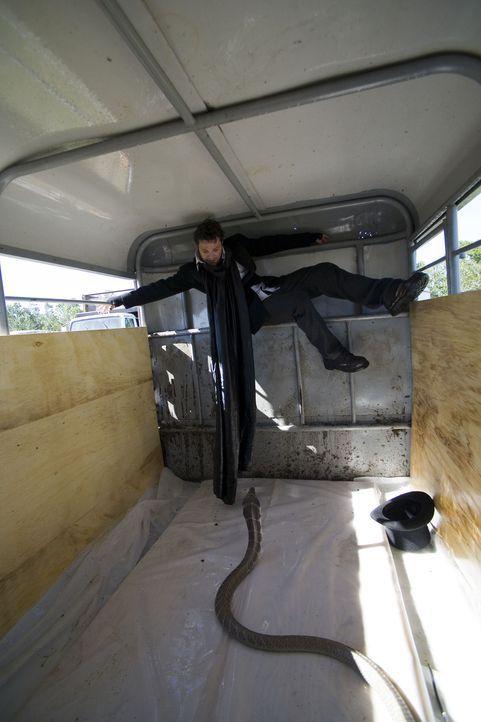 Liebt das Risiko: Schlangenbeschwörer Bam Margera ... - Bildquelle: 2007 BY PARAMOUNT PICTURES AND MTV NETWORKS. A DIVISION OF VIACOM INTERNATIONAL INC. ALL RIGHTS RESERVED.