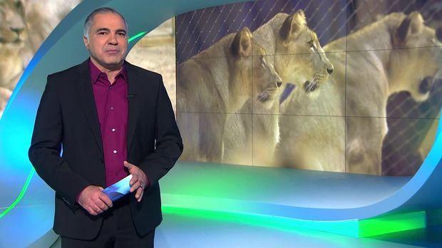 Galileo - Galileo - Freitag: Der Beruf Des Löwendompteurs