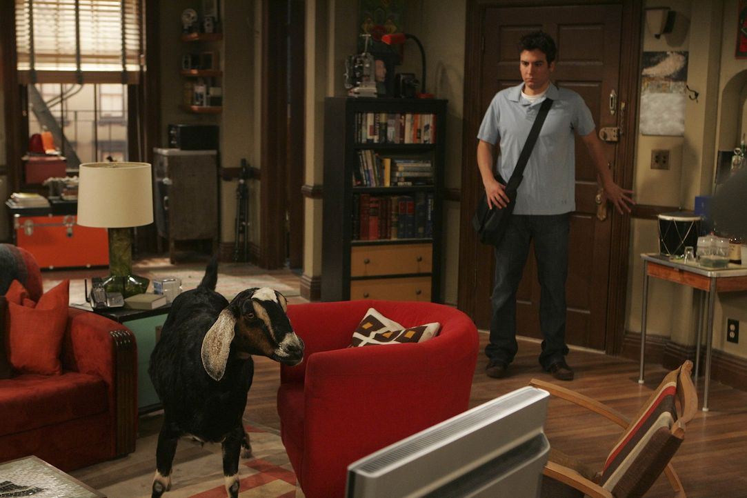 Ted (Josh Radnor) bekommt tierischen Besuch ... - Bildquelle: 20th Century Fox International Television