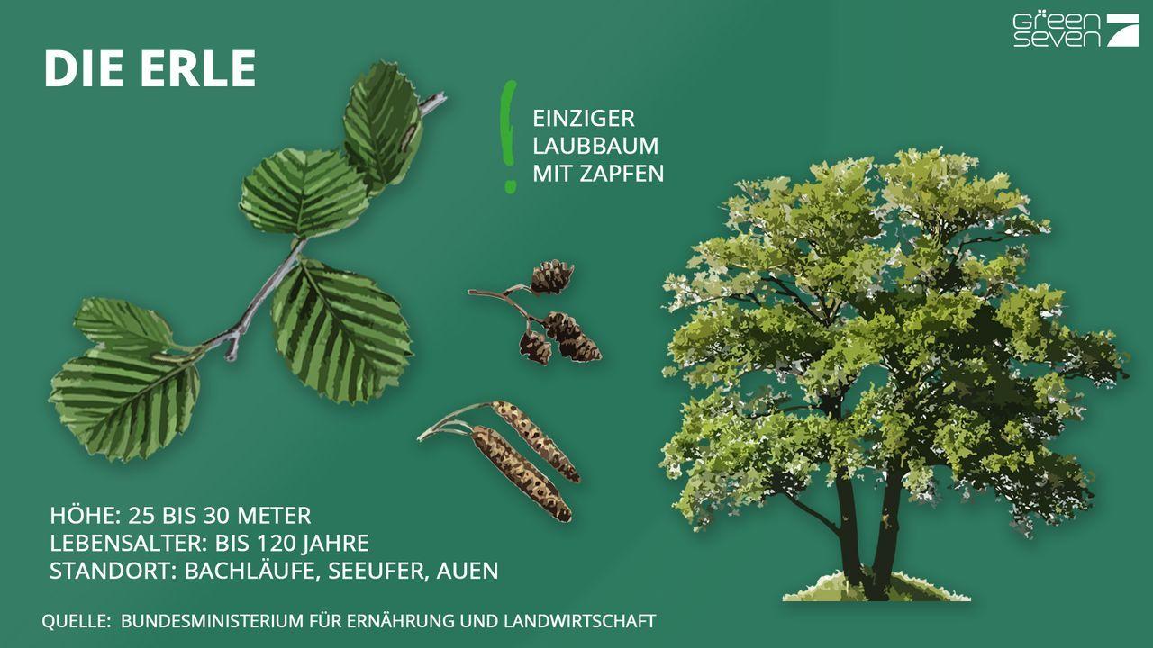 Erle - Bildquelle: ProSieben