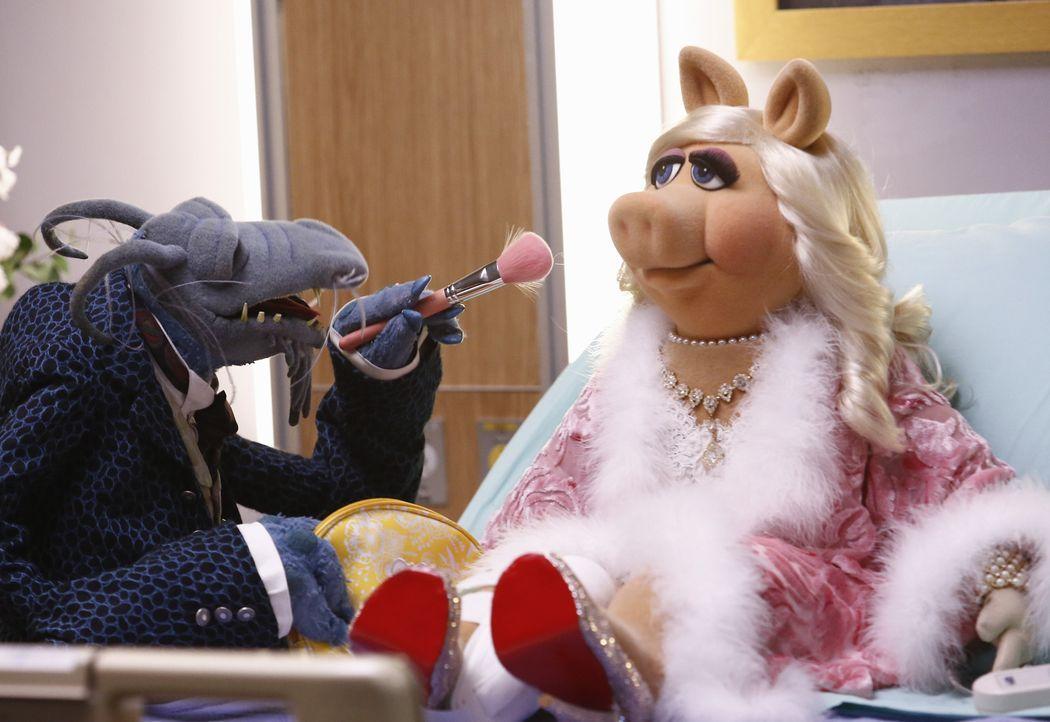 Nachdem sich Miss Piggy (r.) bei den Proben für eine Tanzeinlage das Bein gebrochen hat, möchte Kermit ihre Show aus dem Krankenhaus senden. Onkel T... - Bildquelle: ABC Studios