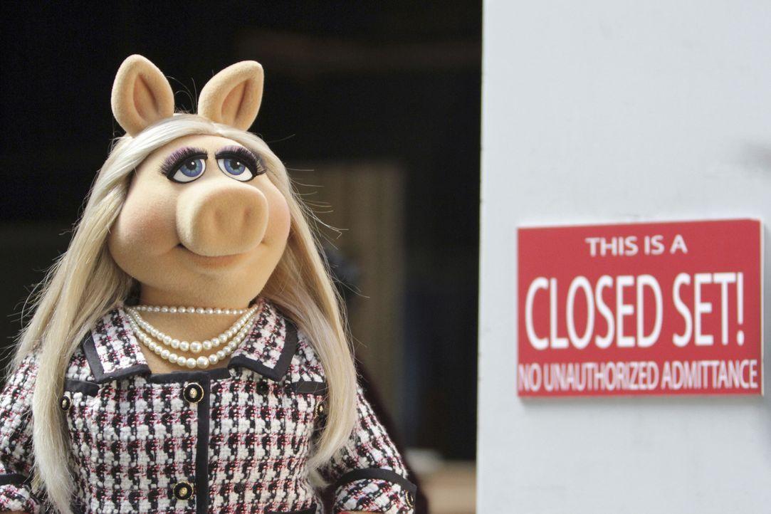 """Eine neue Sendung wird geplant - Kermit hat die Schauspielerin und Regisseurin Elizabeth Banks als Gast für die nächste Ausgabe von """"Up Late with Mi... - Bildquelle: Andrea McCallin ABC Studios"""