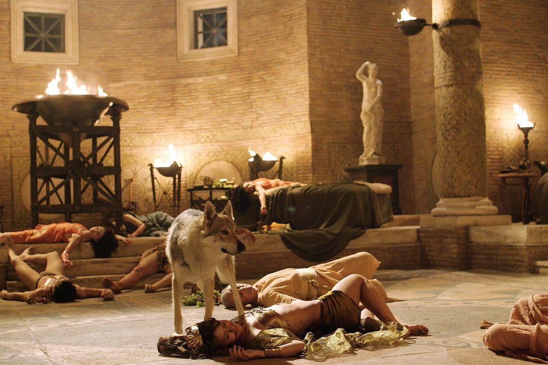Hunderte von Giftschlangen töten die Gäste von Antonius' Landparty ... - Bildquelle: Hallmark Entertainment