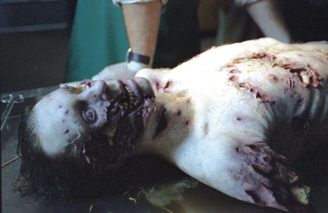 Sein erster Tag als Sheriff verläuft alles andere als ruhig für Kyle Williams. Eine furchtbar zerrissene Leiche wird im nahen Sumpf gefunden - und... - Bildquelle: Falcom Media Group AG