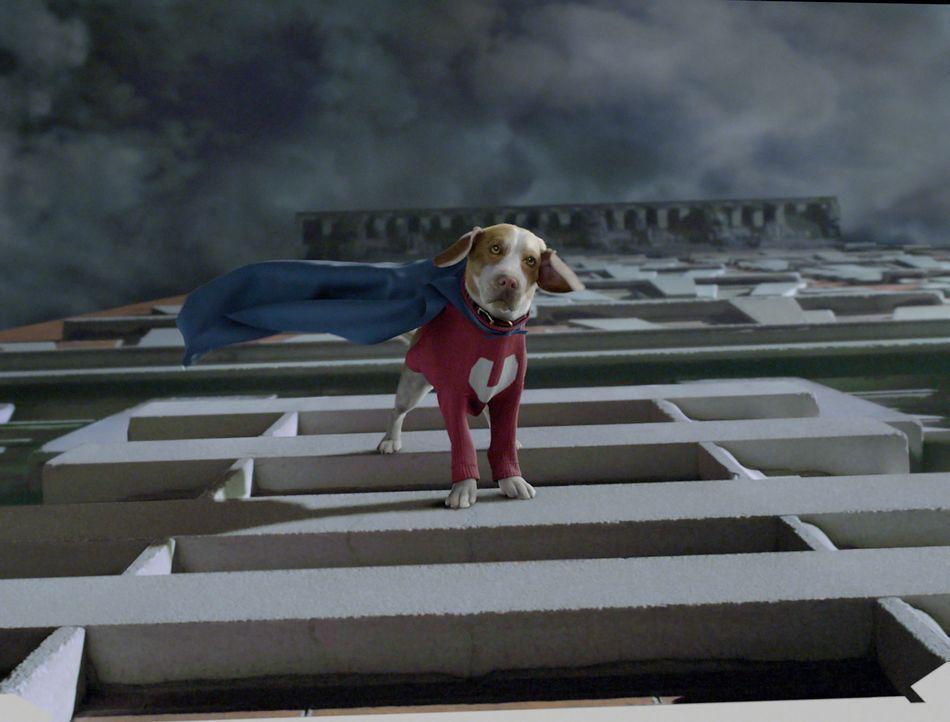 Der süße Shoeshine mutiert zum Superhund ... - Bildquelle: Walt Disney Pictures.  All rights reserved