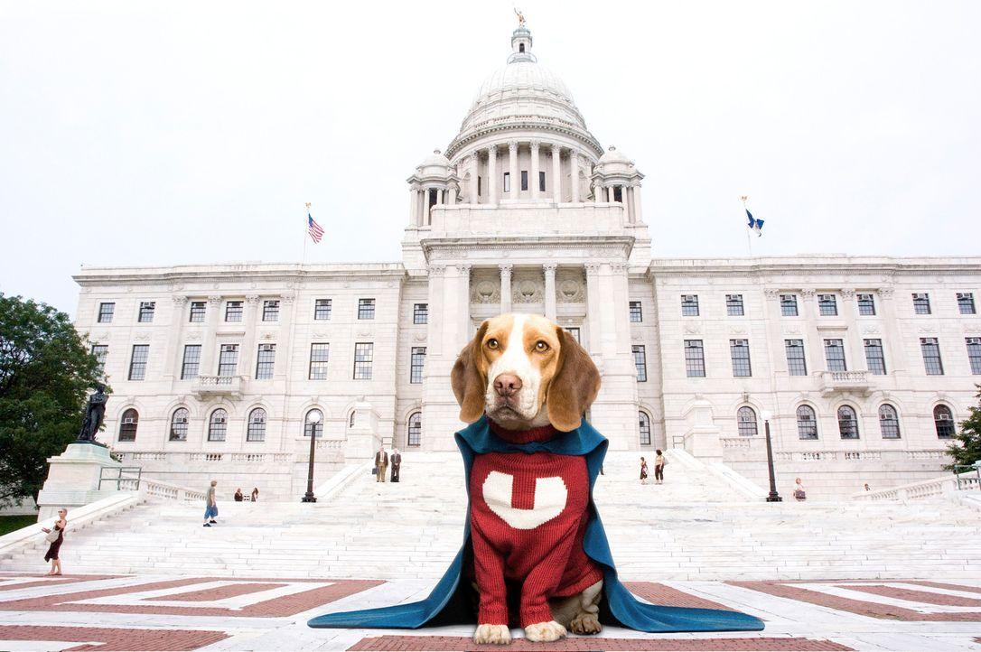 Ein so genanntes Supervitamin verleiht dem Beagle Shoeshine Superkräfte ... - Bildquelle: Walt Disney Pictures.  All rights reserved