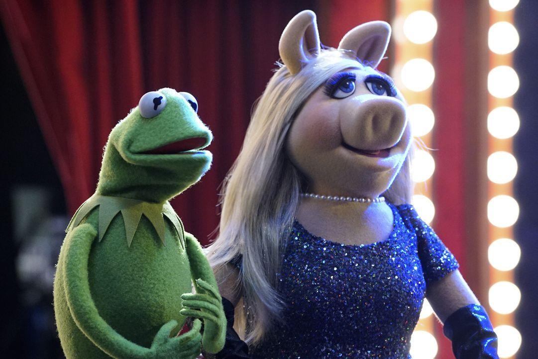 Miss Piggy (r.) ist stocksauer, dass ihr Exfreund Kermit (r.) Elizabeth Banks als Gast in ihre Late Night Talk Show eingeladen hat, denn diese erinn... - Bildquelle: Eric McCandless ABC Studios