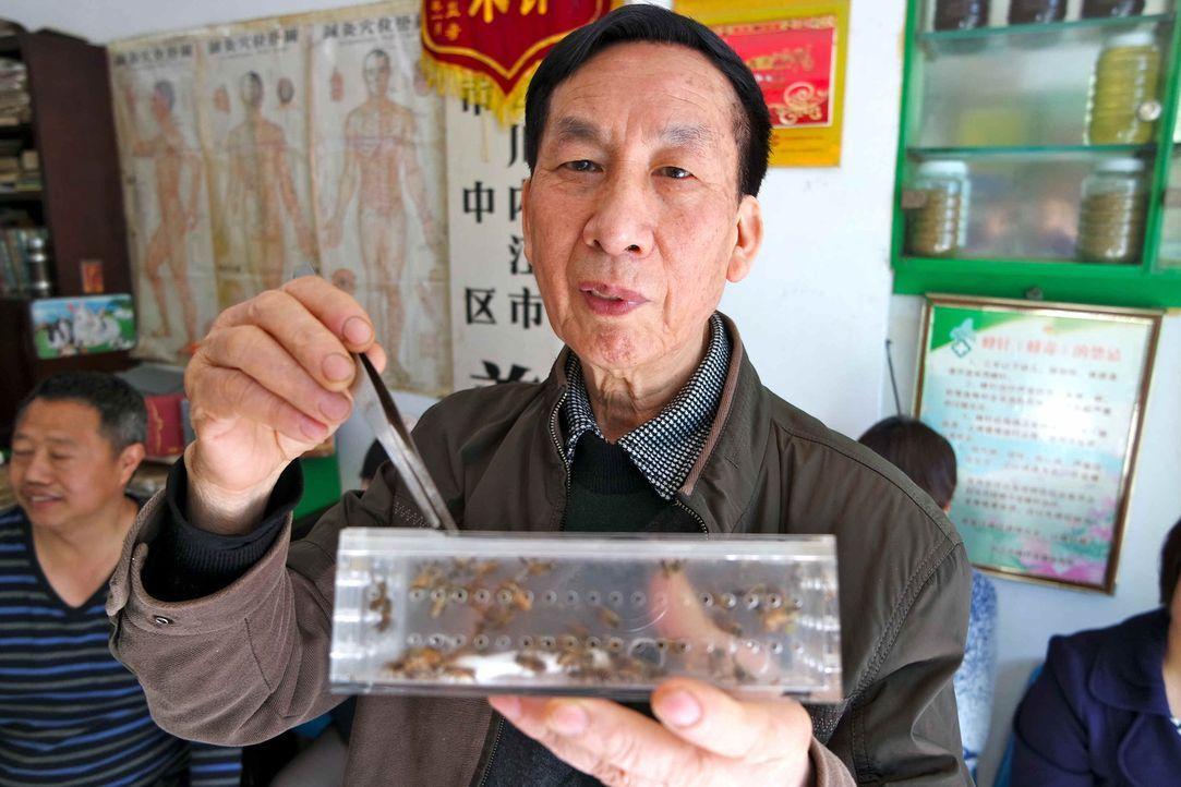 Bienenakupunteur Chow Yonggui ist stolz auf seine Biene und seine ganz besondere Behandlungsmethode ... - Bildquelle: ProSieben