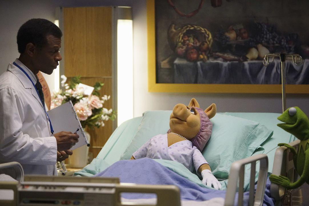 Kermit (r.) und Onkel Tödlich haben es geschafft, Miss Piggy (M.) ins Krankenhaus zu bekommen. Doch als der Arzt (Phil Lamarr, l.) ihr mitteilt, das... - Bildquelle: ABC Studios