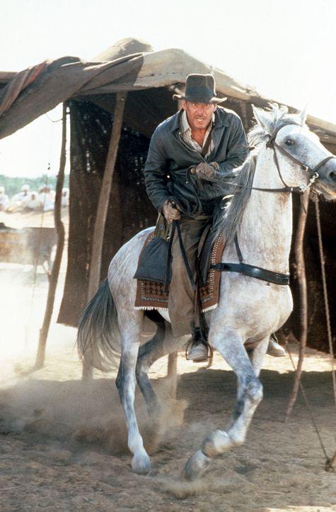 Immer im Einsatz des Guten: Indiana Jones (Harrison Ford) ... - Bildquelle: Paramount Pictures