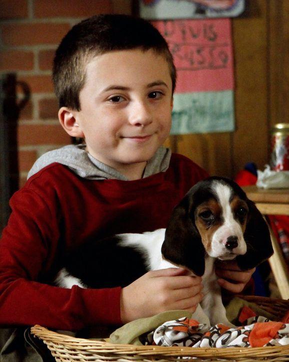Brick (Atticus Shaffer) überredet seine Eltern, dass er sich um den Hund seiner Tante kümmern darf ... - Bildquelle: Warner Brothers