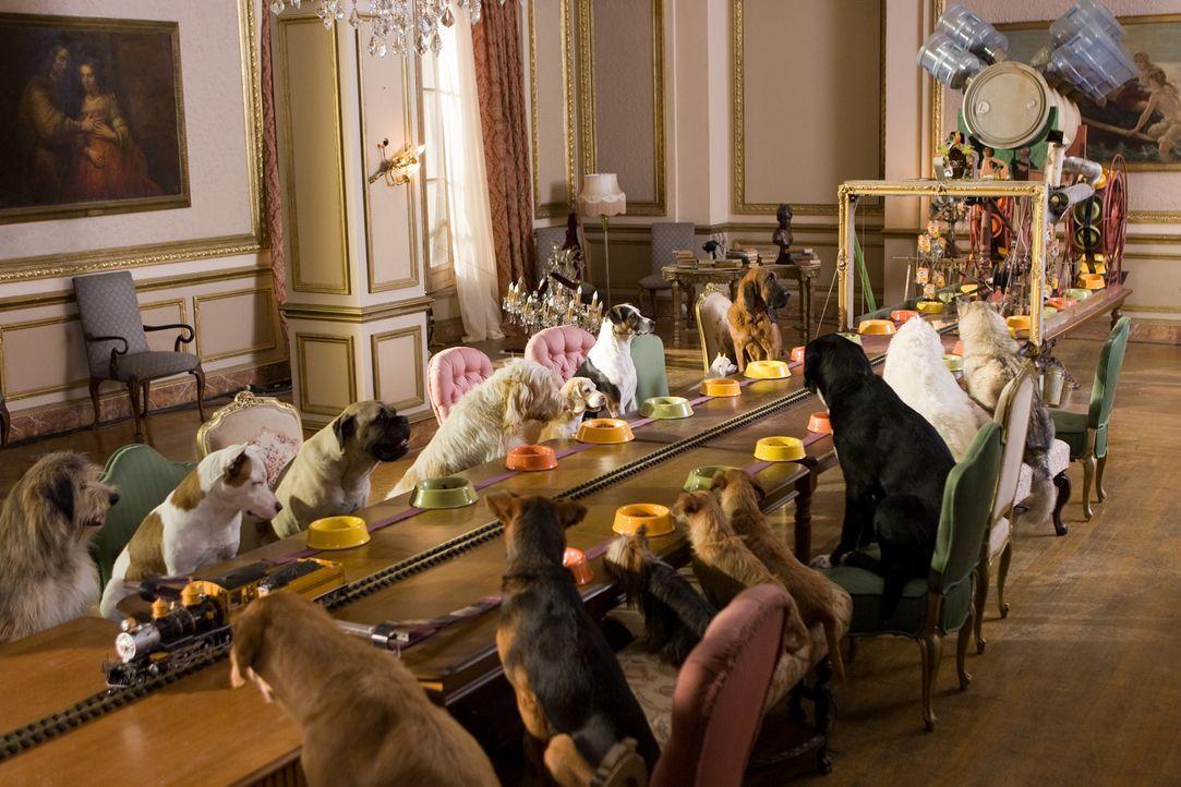 Schon bald schafft es der erfindungsreiche Tüfftler Bruce, den Hunden eine artgerechte und luxuriöse Umgebung zu schaffen. Doch dann rufen die belle... - Bildquelle: MMVIII MavroCine Pictures GmbH & Co. KG All Rights Reserved.