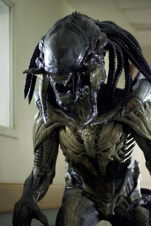 Auf einem Rauschiff entsteht eine neue Spezies aus Alien und Preditor. Als dieses Schiff in den Wäldern einer kleinen amerikanischen Ortschaft abstü... - Bildquelle: James Dittiger 2007 Twentieth Century Fox Film Corporation. / James Dittiger