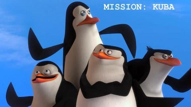 Pinguine Madagascar Stream