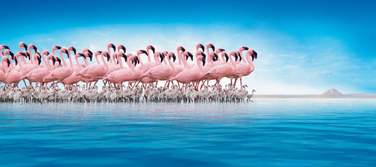 Am Ufer des entlegenen Natronsees im Norden Tansanias lebt eine gigantische Kolonie von über 1,5 Millionen Flamingos. Inmitten dieser erbarmungslos... - Bildquelle: Disney Enterprises, Inc.  All rights reserved.