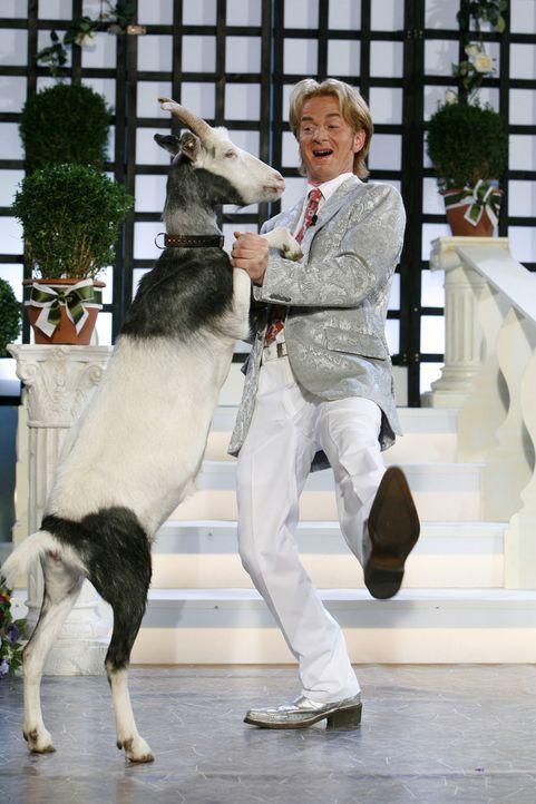 Florian Silbereisen (Michael Kessler) legt mit seiner Ziege eine flotte Sohle aufs Parkett ... - Bildquelle: ProSieben