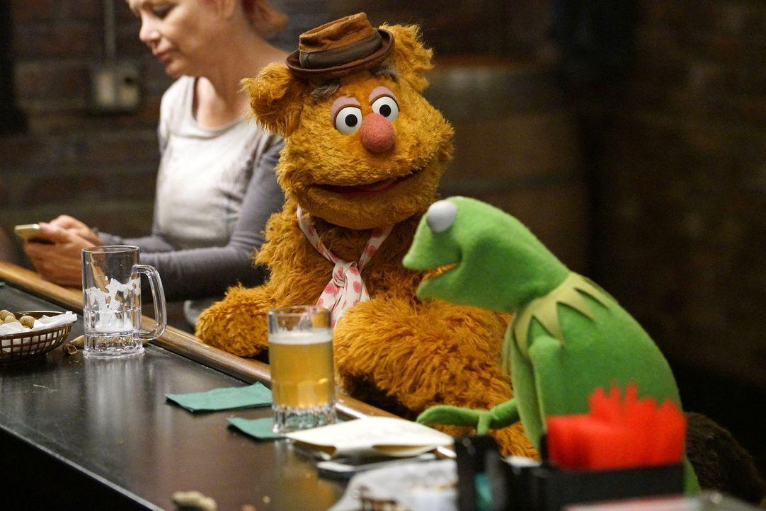 Kermit (r.) findet die neuen Sketche von Fozzie (l.) schrecklich. Fozzie ist darüber so sehr enttäuscht, dass er voreilig kündigt ... - Bildquelle: Adam Taylor ABC Studios