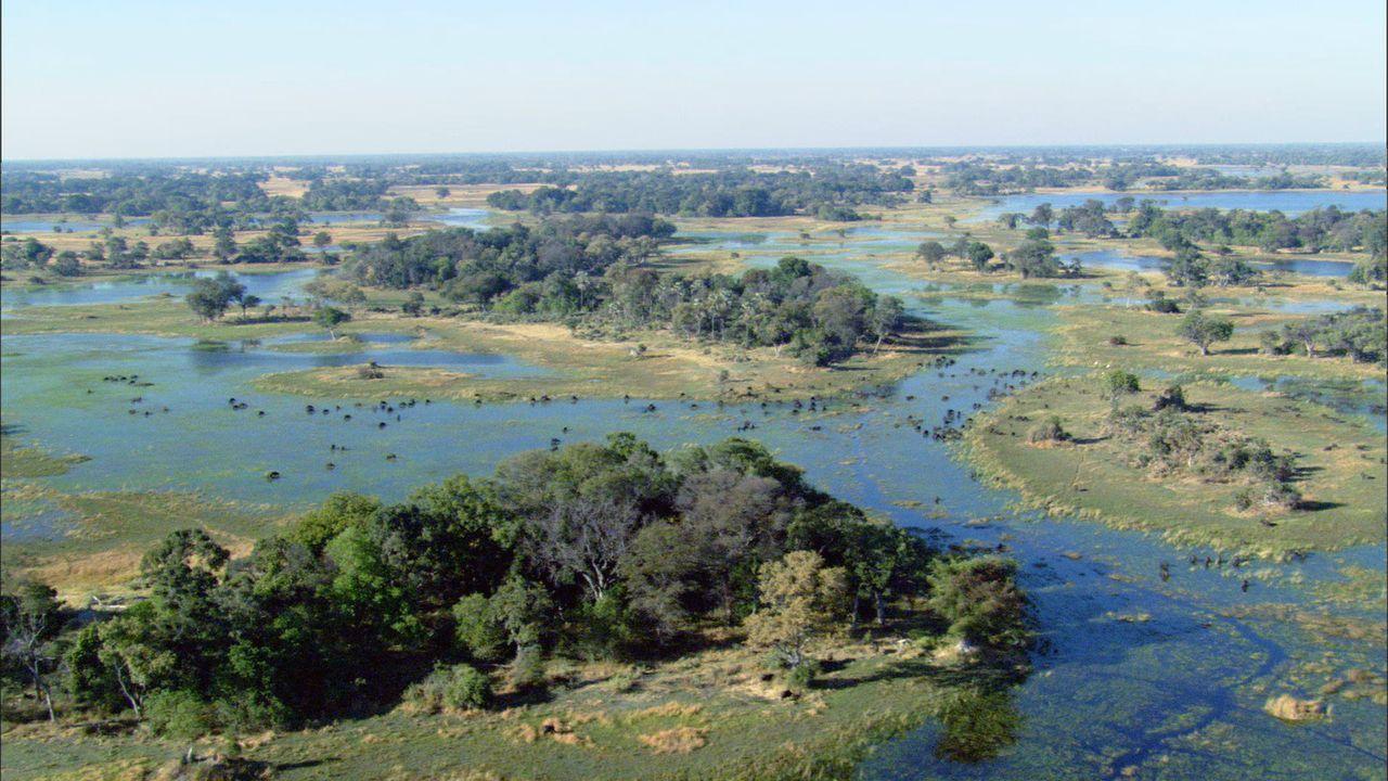 Für viele Tier die einzige Chance zu überleben: Das Okavango Delta in Botswana ist mit über 20000 Quadratkilometern eines der größten und tierr... - Bildquelle: Earth   BBC Worldwide Ltd 2007