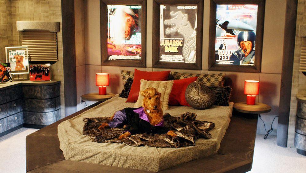 Rexx, der Feuerwehrhund - Bildquelle: New Regency Productions, Inc.