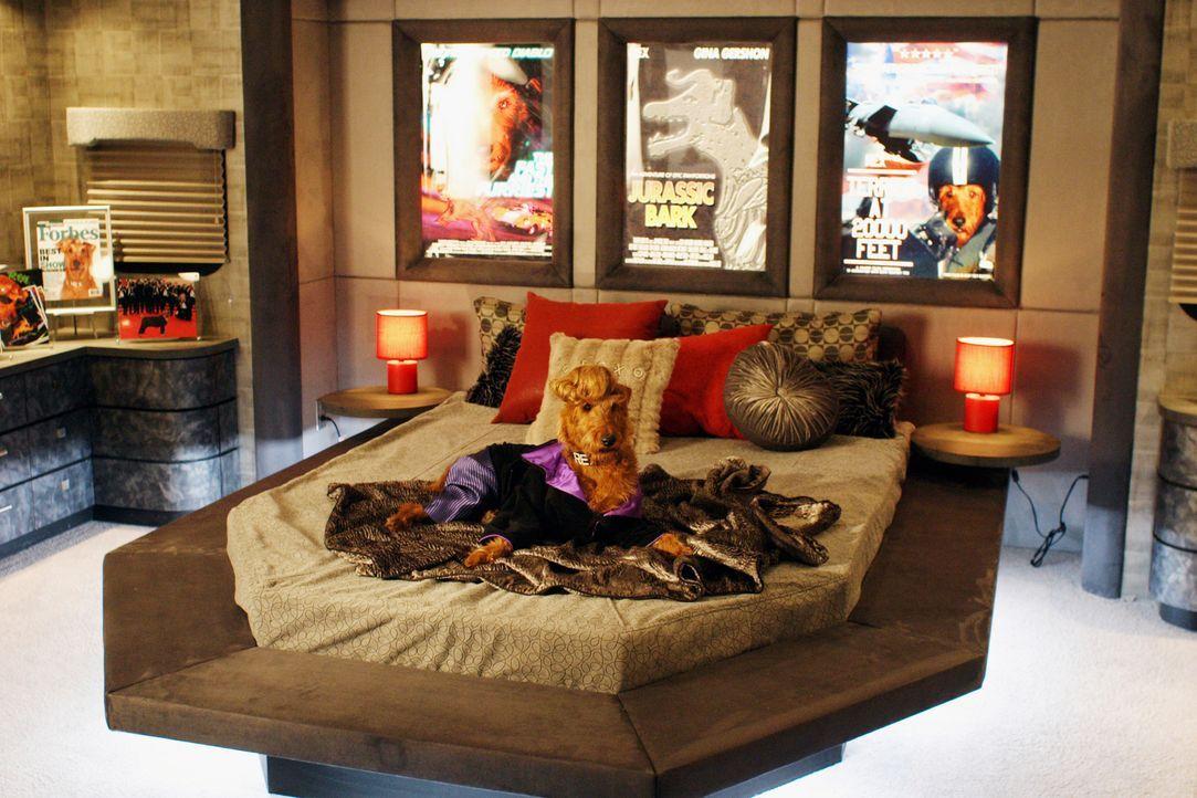 Rexx ist der coolste Hund der Welt und hat aufgrund seiner außergewöhnlichen Talente in Hollywood Karriere gemacht ... - Bildquelle: New Regency Productions, Inc.