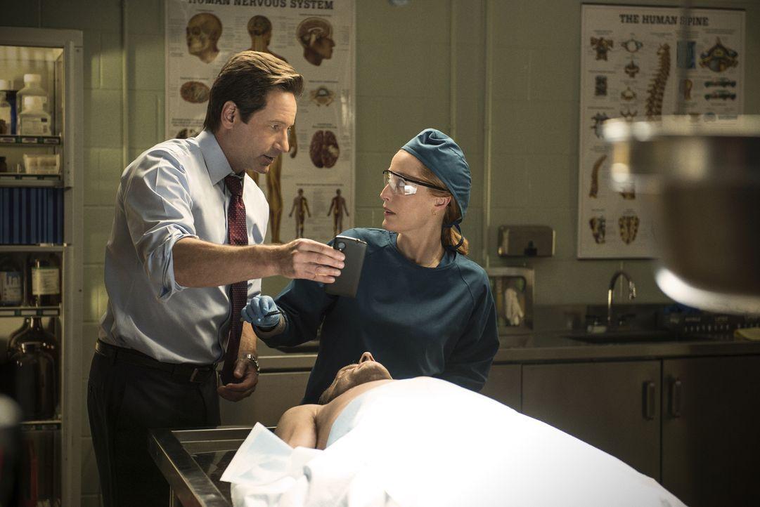 Der Tod eines Mannes stellt Mulder (David Duchovny, l.) und Scully (Gillian Anderson, r.) vor einige Rätsel ... - Bildquelle: 2016 Fox and its related entities.  All rights reserved.
